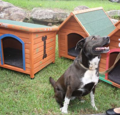 Millie with kennel