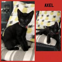 4479-Axel-picture0