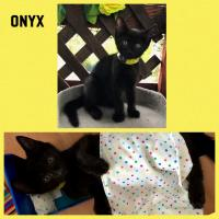 4482-Onyx-picture0